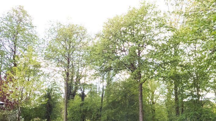 Bomen Ugchelen 770 400