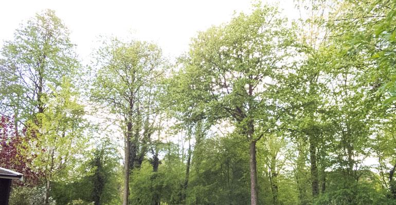 Bomen en Ugchelen