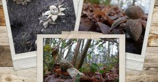 collage-paddestoelen