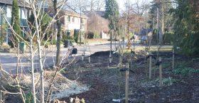 Bijna voorjaar in de Ugchelen Bloeit! tuin
